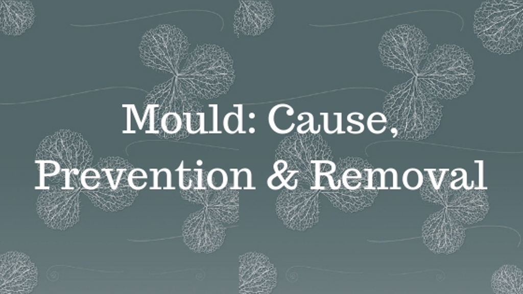 Mould: Cause, Prevention & Removal